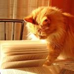 readingcat2
